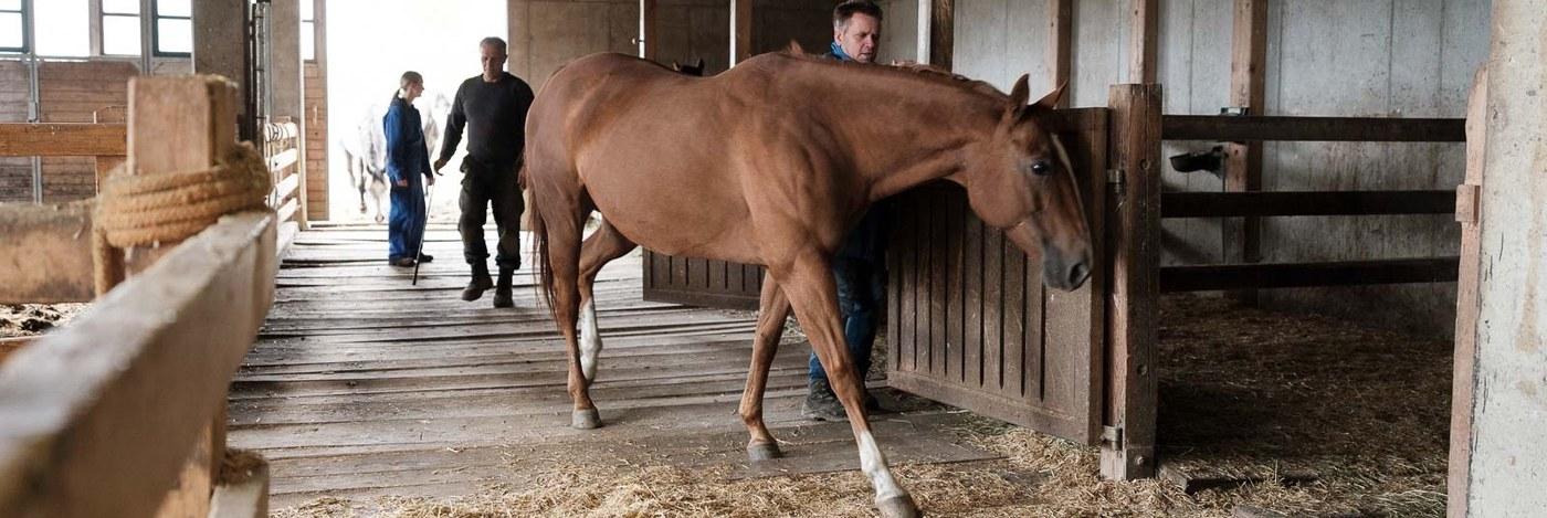 Betcha Pferd